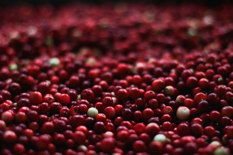 holiday-food-cranberry.jpeg